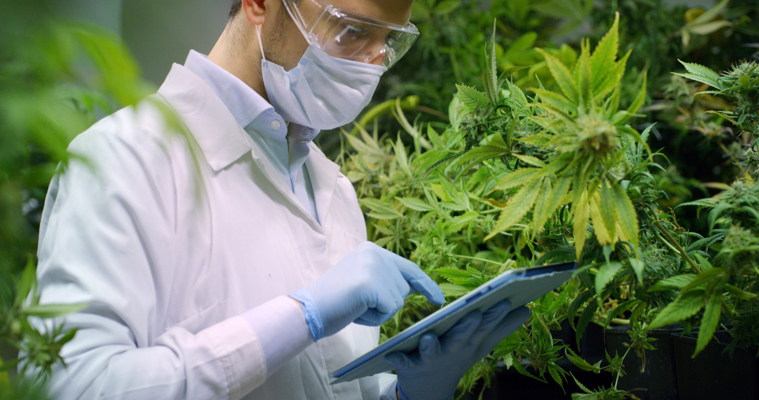 Review Of Research Shows More Work Needed On How Cannabis Impacts Health